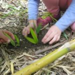 April Forum: The potential of nature play