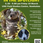 Koalas in the Spotlight experience — reserve your place